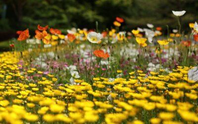 Raus mit Pestiziden, rein mit Wildblumen